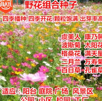 野花组合种子四季播波斯菊格桑花虞美人太阳花绿化工程草菊百日草