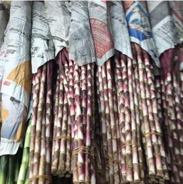 批发采购 红叶朱蕉水生植物 红叶朱蕉 紫叶竹欢迎选购