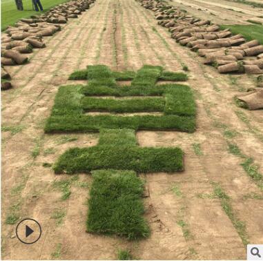 供应安康运动场人工草皮生长周期长耐盐碱草坪 耐践踏返青快
