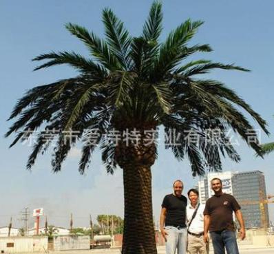 厂家直销仿真中东海藻树仿真椰子树可设计定做假树加拿大海藻树