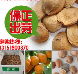 杏核 新采林木种子 果树种子杏树种子 绿色植物绿化苗木果树种子