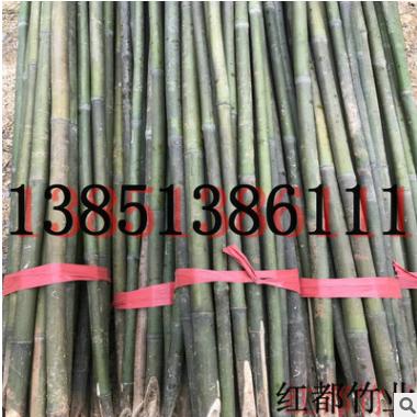 超值低价批发庭院观赏竹子-1-10cm红壳雷竹、根系发达、成活率高