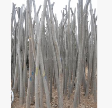 供应合欢、楸树、栾树、白蜡、国槐等绿化乔木(推荐)-绿化苗木