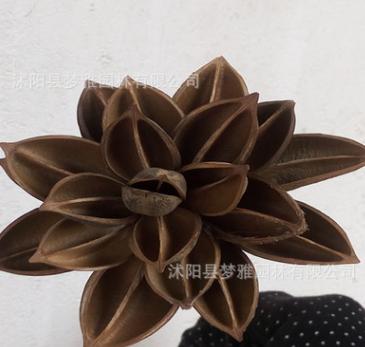 手工制作天然物荷花仿真睡莲花道具拍摄花花瓶插花装饰花