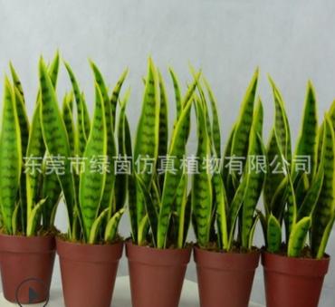 厂家直销虎皮兰盆栽 绿色虎皮兰叶子 仿真绿植批发 装饰摆件定制
