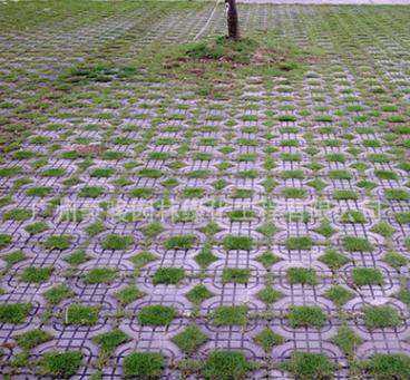 供应豪骏各种形状型 植草砖 停车场地砖 提供施工服务 地砖 施工