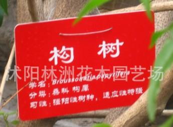 构树小苗价格 构树种子价格 构树苗 基地直销