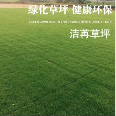 洁苒草坪 百慕大草坪多款可选健康环保