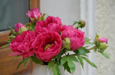 批发芍药鲜切花 家庭花瓶插花 鲜花艺术欣赏 欢迎预定 团购价格