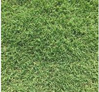 精品矮生百慕大马尼拉草坪