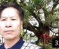 内蒙古又广西桂林 园林景观造园技术培训 仿石仿木仿树 (153播放)