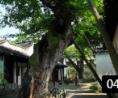 苏州园林山水古典园林艺术传统古建筑高清实拍视频素材 (265播放)
