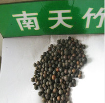 南天竹种子