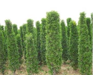 苗木种植及新品种开发4