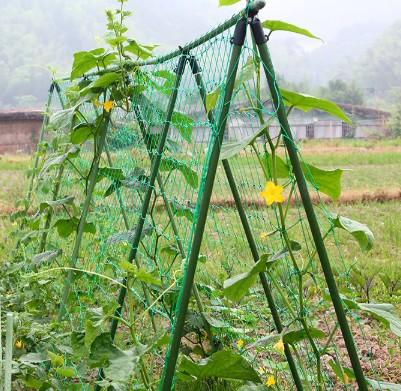 家用园艺爬藤网 瓜果牵牛花铁线莲黄瓜爬藤植物爬藤架1.8*0.9米