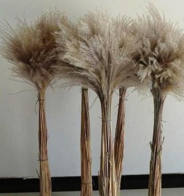 天然芦苇花 干花芦苇干花麦穗 干花狗尾草 天然芦苇花 装饰 道具