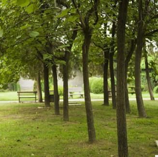 【基地直销】 楸树 楸树树苗批发工程绿化苗木 量大优惠价格从优