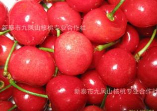 供应红妃樱桃树苗,大果短柄樱桃苗,南早樱桃树苗,红樱樱桃苗木