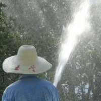 大树移植后,浇对水很关键!它是一个技术活儿!
