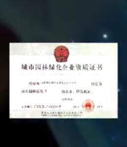 上海精文绿化艺术发展有限公司—观赏植物部宣传片 (333播放)