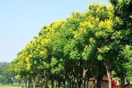 佛甲草 盆栽 草花地被 批发价格 基地直销 品种齐全 量大优惠