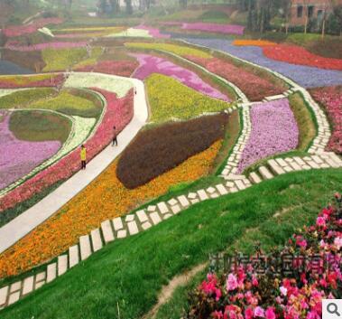 野花种子组合草花种子满天星太阳花波斯菊种子格桑花二月兰百日草
