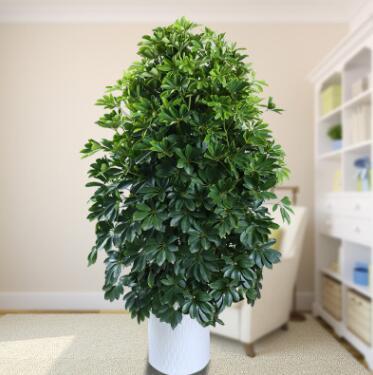 室内大型客厅办公盆栽花卉八方来财鸭脚木鸭掌木观叶植物招财树