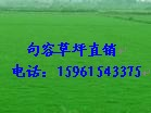 大量供应百慕大与黑麦草混播草坪四季青电15961543375