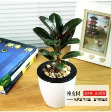 绿萝水培植物盆栽花卉室内绿植办公室室内盆栽绿萝盆景