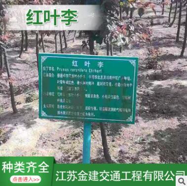红叶李 紫叶李 1-15公分 规格 品种 齐全 土球好 冠幅好