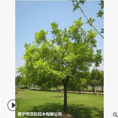 低价供应绿化苗木吊瓜树花木农户自家花场直销宠物及园艺园林