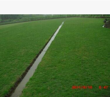 大量供应人造草坪中华细叶结缕草坪 草种成都草种草坪重庆草皮