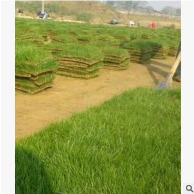 马尼拉 萧山 各类 地被 绿化工程 水生植物 基地直销 大量批