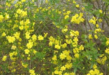 基地批发迎夏苗 品种齐全量大优惠工程绿化 庭院装饰