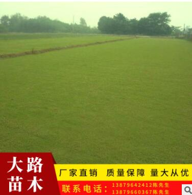 绿化草坪真草皮批发 小区别墅工程绿化冬耐寒耐踏草皮百慕大草皮