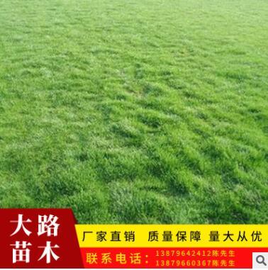 绿化草坪真草皮批发 小区别墅工程绿化冬草皮百慕大混播果岭草