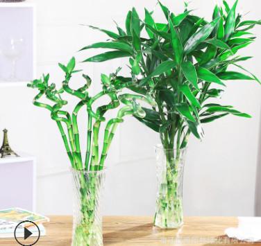 水培富贵竹植物水养大叶竹客厅招财花卉盆栽玻璃花瓶转运弯竹龙竹