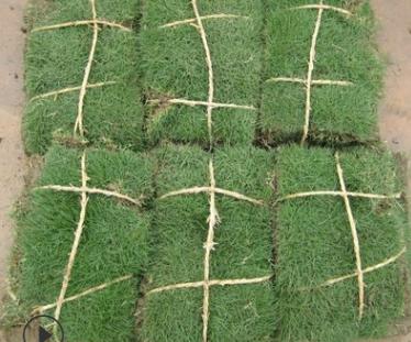 马尼拉 园林 树木 花灌木 地被 球类 色块类 草花类 乔木 草坪