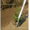 基地批发 绿草苗 摆字植物