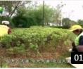 完善园林和市政设施 推进全域环境整治 (205播放)