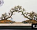 雀梅盆景的修剪与放养 (146播放)