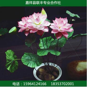 盆栽水生植物 园林绿化 荷花 盆栽荷花批发销售成品