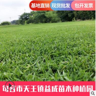 厂家批发绿化真草坪草皮百慕大草皮 耐践踏公园球场草皮量大