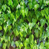 林业植物新品种保护20年成效显著