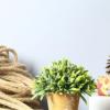 zakka办公室客厅家居装饰盆景摆件 乡村清新绿植仿真植物盆栽