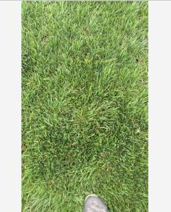 江苏常州马尼拉常年无限量直销优质草坪,快速让泥地变绿地