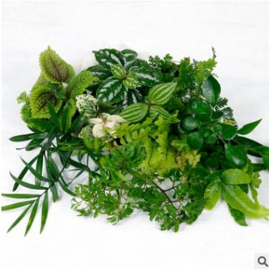 单株观叶植物微景观植物水陆缸雨林缸盆栽办公室绿植室内蕨类水培