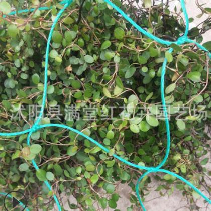 厂家供应植物爬藤网加强版尼龙 家用园艺网 园艺用品爬藤网攀爬网