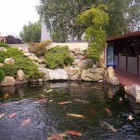 做庭院里做观赏鱼池很常见,但是却很少有人知道搭配过滤设备