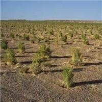 沙漠造林会加剧水资源短缺?应选合适树种